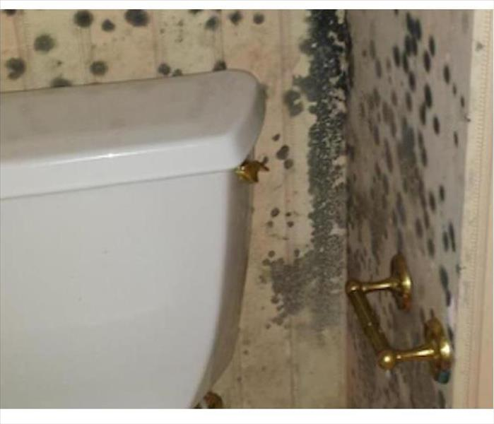 Kingston Mold Infested Bathroom