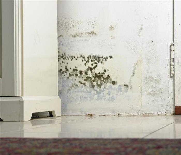 Mold Remediation Understanding Mold Remediation for Your Newmarket Home