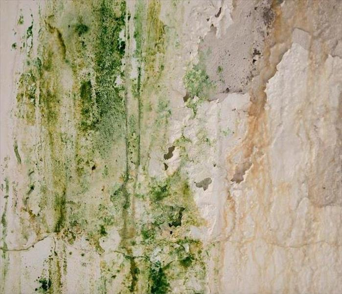 Mold Remediation What Makes Your Durham Basement Meet Conditions for Mold Growth?