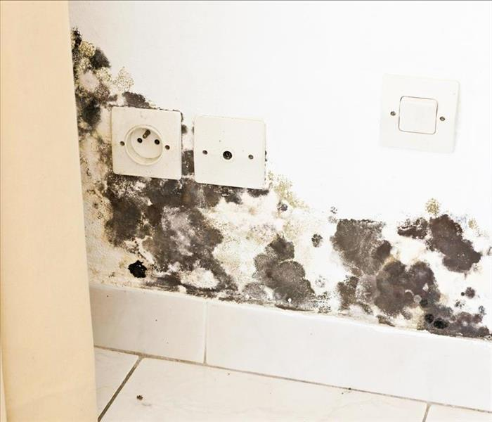 Mold Remediation Preventing the Spread of Mold Damage in Your Durham Property
