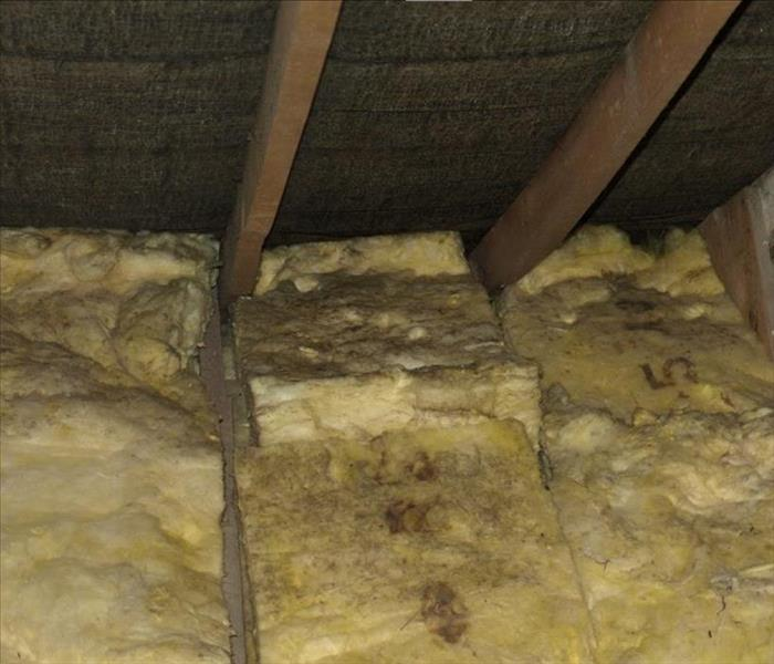 Mold Remediation Attic Space Sustaining Mold Damage in Durham Places the Entire Home at Risk