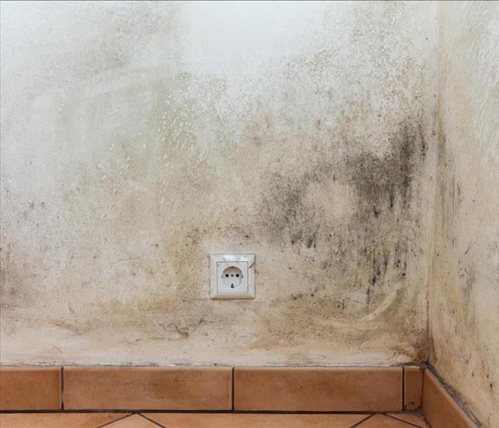 Mold Remediation Cleaning up Mold Damage in Your Durham Home