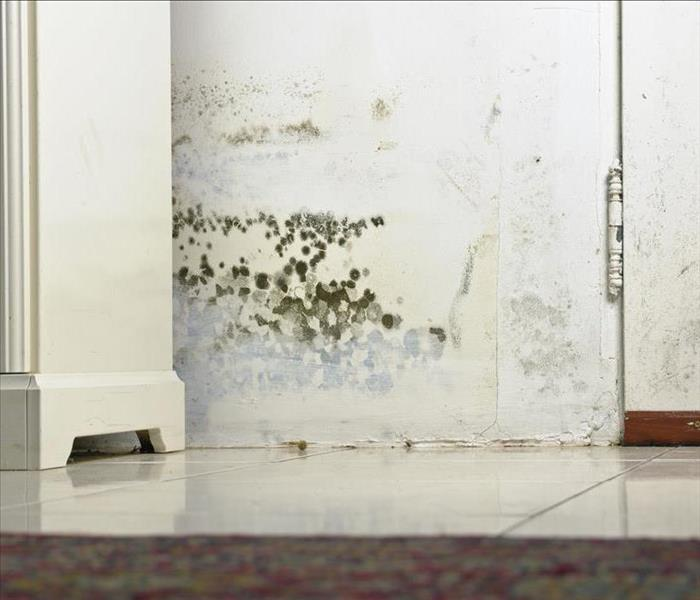 Mold Remediation How Did Mold Damage Get Into My Newmarket Home?